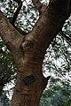 Acharya Jagadish Chandra Bose Indian Botanic Garden - Howrah 2011-02-20 1563.JPG