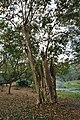 Acharya Jagadish Chandra Bose Indian Botanic Garden - Howrah 2011-02-20 1653.JPG