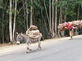 Addis Abeba-Collines d'Entoto (10).jpg