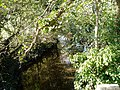 Afon Ystrad - geograph.org.uk - 274834.jpg