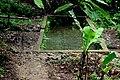 Air SURGA, salah satu sumber mata air yg mata airnya jernih - panoramio.jpg