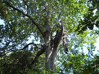 Italian sclerophyllous and semi-deciduous forests