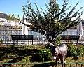 Alcoutim (Portugal) (33118179131).jpg