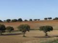 Alentejo Countryside - Castro Verde - Portugal.png