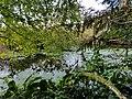 Algae bloom on Anderson Lake.jpg
