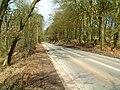 Allanton Woods - geograph.org.uk - 150248.jpg