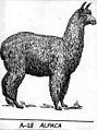 Alpaca (PSF).jpg