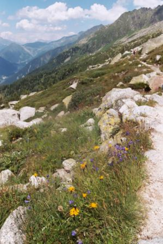 Flora of the Alps - Flora typical of the Alpine Region of the Alps