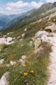 Alpine flora.png