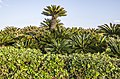 Amazing green nature - panoramio.jpg