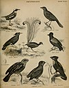 "An introduction to the natural history of birds; being the article ""Ornithology"", from the seventh edition of the Encyclopedia Britannica (1839) (14728094526).jpg"