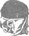 Anatomia Britannica- a system of anatomy Fleuron N001319-36.png