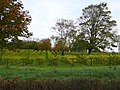 Ancre Hill Vineyard - geograph.org.uk - 1084496.jpg