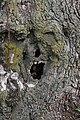 Angry Tree - panoramio.jpg