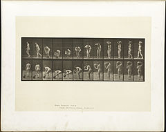 Animal locomotion. Plate 225 (Boston Public Library).jpg