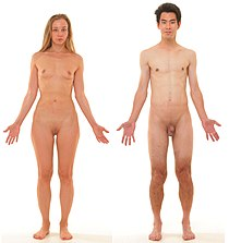 Anterior view of human female and male, without labels.jpg
