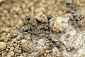 Ants-sandy-ground (Unsplash).jpg