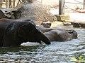 Antwerp Zoo (12210904523).jpg