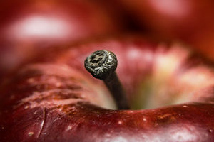 Macro photo of an Apple, taken with a Canon 350D, 100-400 L IS F/4.5-5.6, 56mm of extension tubes, and a Sigma EF500 EX DG Super flash unit