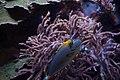Aquarium at the Royal Ontario Museum (5784271359).jpg