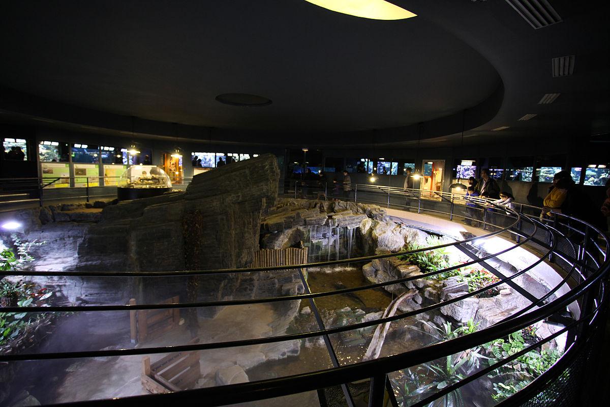 Aquarium Du Palais De La Porte Dor E Wikip Dia