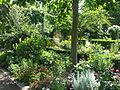 Arboretum Gaston Allard 7.JPG