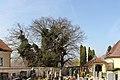 Ardagger - Friedhof des Stifts und Naturdenkmal AM-055 - Winterlinden.jpg