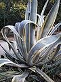 Arizona Cactus Garden 066.JPG