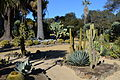 Arizona Cactus Garden at Stanford University 2.JPG