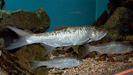dammen av fisk dating Vad är några 100 gratis dejtingsajter
