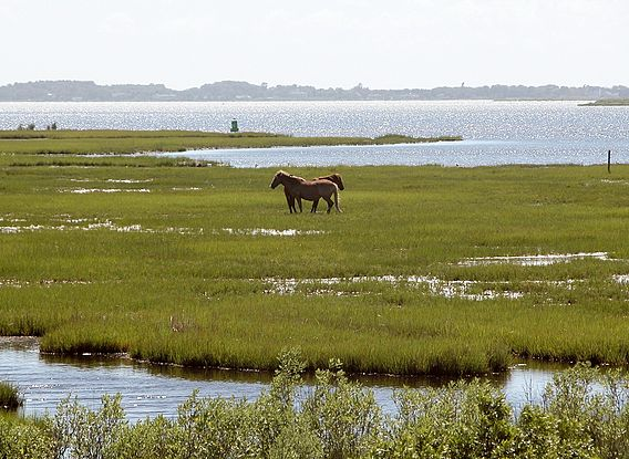 Assateague Island Climate And Weather