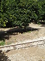 At Pardes Minkov - The Tarazina Tracks P1220082.JPG