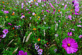 Autumn-flower-field-large-purple-flower - Virginia - ForestWander.jpg