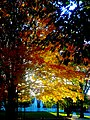 Autumn Colors in Madison - panoramio (7).jpg