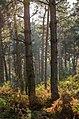 Autumn Forest (49620490).jpeg