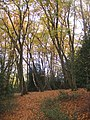 Autumn colours along the footpath - geograph.org.uk - 1081921.jpg