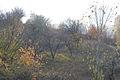 Autumn is in full swing - 2 (2008). (9781925415).jpg