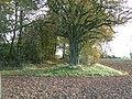 Autumn trees - geograph.org.uk - 1041468.jpg
