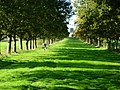 Avenue of Trees, Althorp Estate - geograph.org.uk - 270817.jpg