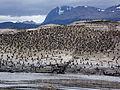 Bahía Ushuaia 274.JPG