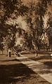 BalboaParkSD1915.jpg
