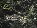 Banat, Nera Canyon - panoramio (16).jpg