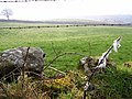 Barbed wire - geograph.org.uk - 380240.jpg