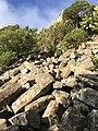 Basalt organ pipes on Mt Cargill, Dunedin, New Zealand.jpg
