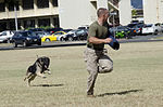 Base library, PMO put on military working dog demonstration 140619-M-TH981-001.jpg