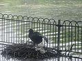 Battersea Bird.jpg