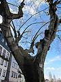 Baum mit ? (14007059775).jpg