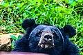 Bawling Bear.jpg
