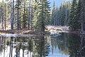 Beaver ponds Kananaskis Alberta Canada (30833252676).jpg