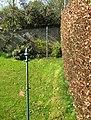 Beech hedge in spring - geograph.org.uk - 789808.jpg